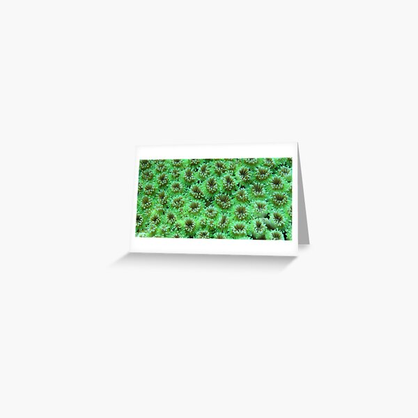 Green Galaxy Greeting Card