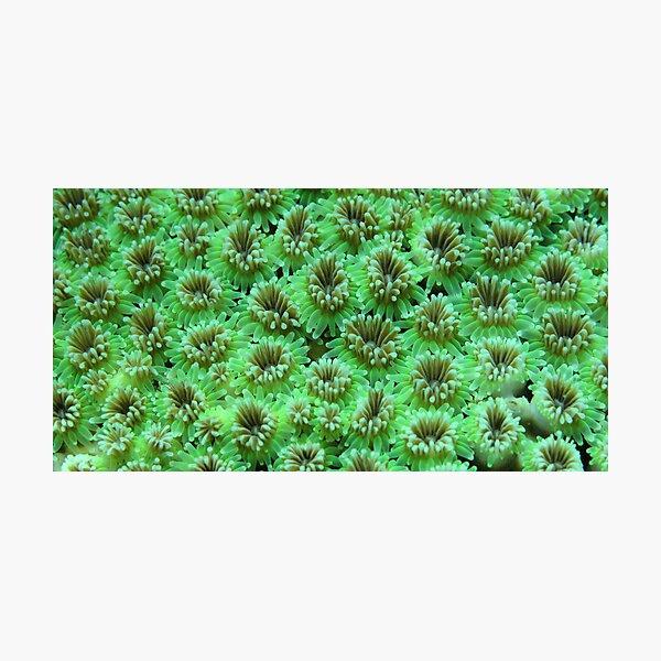 Green Galaxy Photographic Print