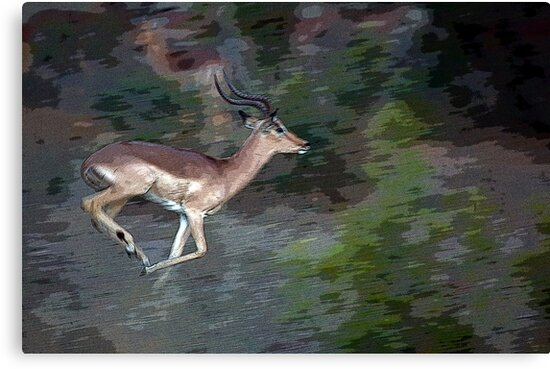 Impala On The Run by Michael  Moss