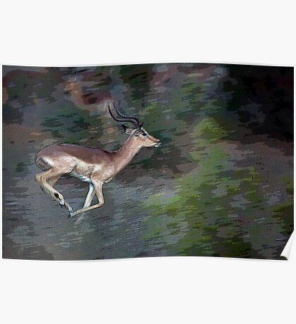 Impala On The Run Poster