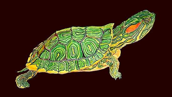 Turtle  by saurabh kumar