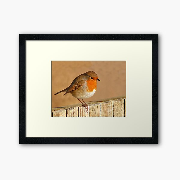 English Robin Framed Art Print