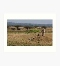 Cheetah Family And Rhinos Art Print