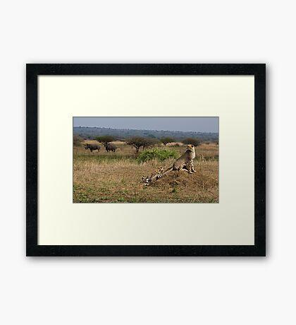 Cheetah Family And Rhinos Framed Print