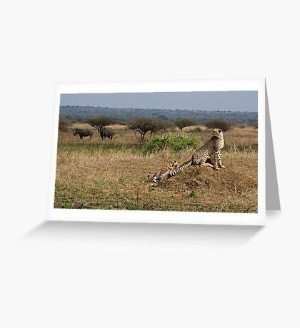 Cheetah Family And Rhinos Greeting Card