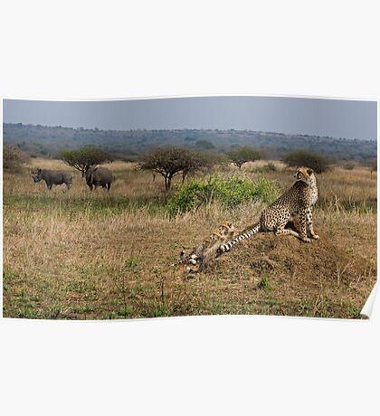 Cheetah Family And Rhinos Poster