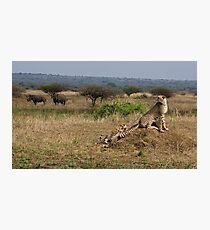 Cheetah Family And Rhinos Photographic Print