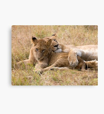 Do I Look Like A Pillow ? Canvas Print