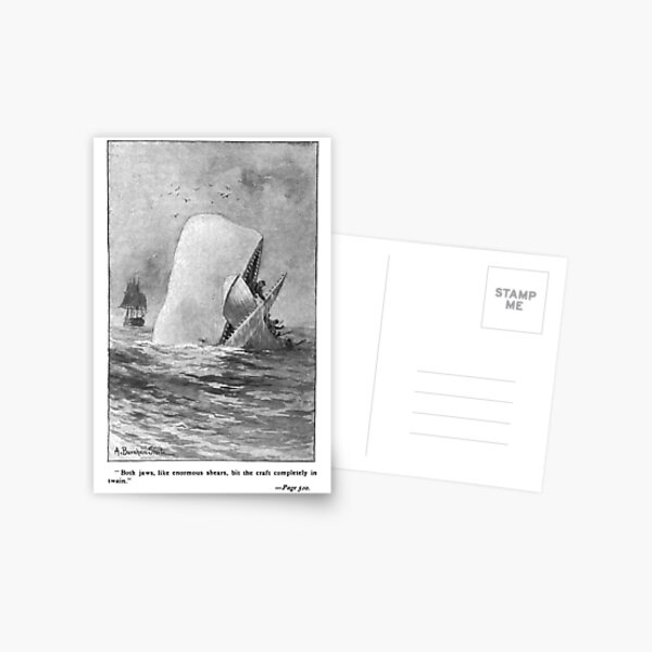 Moby Dick Herman Melville Original Illustration Postcard