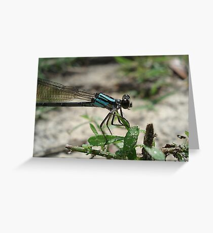 Pitts Spring (Florida) Damsel Greeting Card