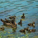 Duck And Ducklings by Rick  Friedle