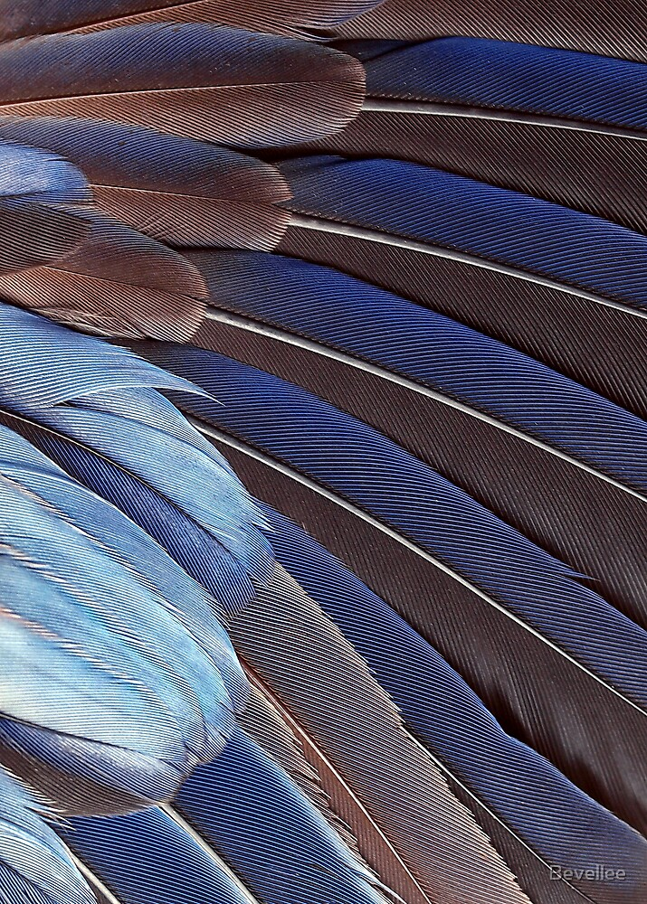 Feathers #110 by Bevellee