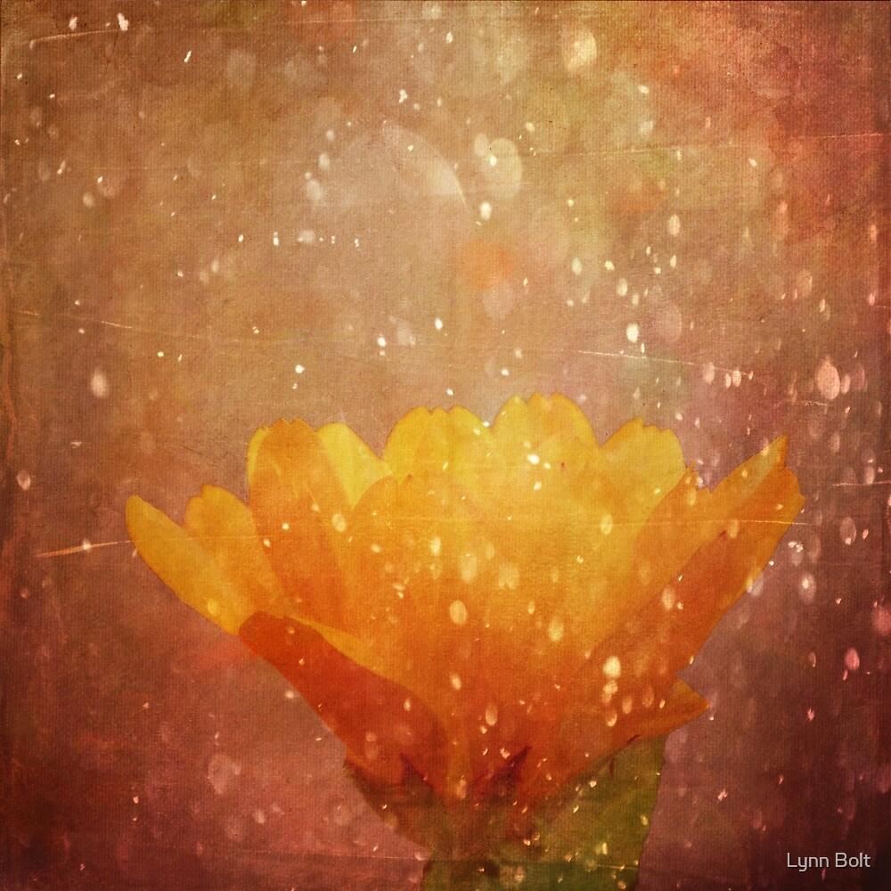 Quot Orange Sparkle Quot By Lynn Bolt Redbubble