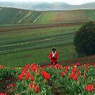 Tulips in bloom, Dandenong Ranges, Australia by Bev Pascoe