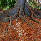 1856 Tree Roots by Hans Kawitzki