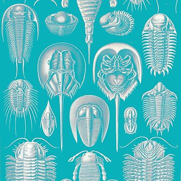 Haeckel Trilobite - Blue by neonxiomai