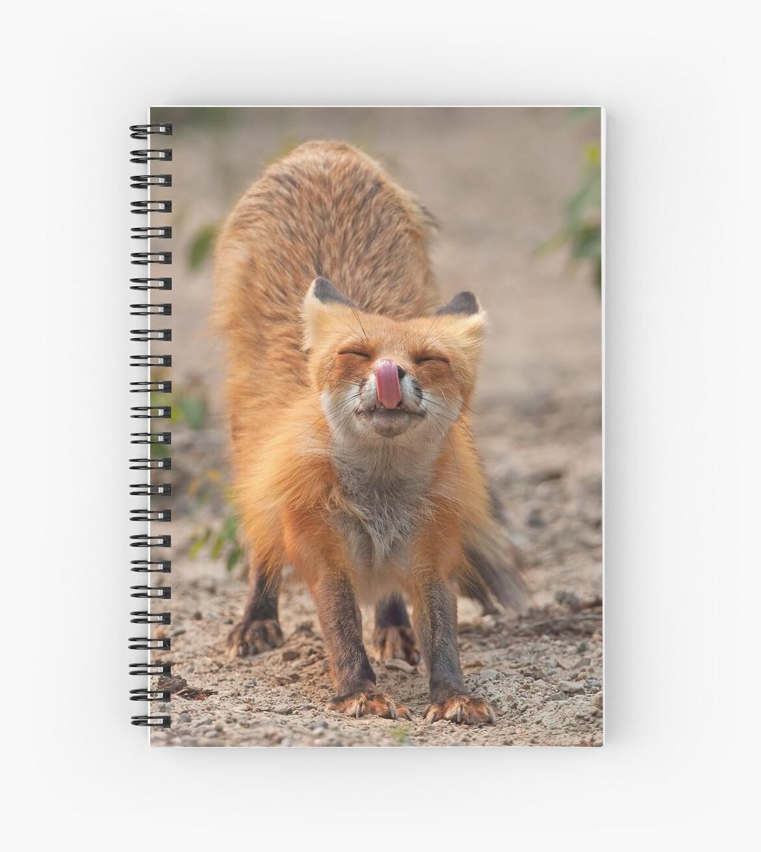 Red Fox Stretch - Algonquin Park, Canada by Jim Cumming
