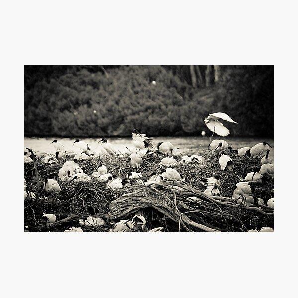 The Isle Of Ibis Photographic Print
