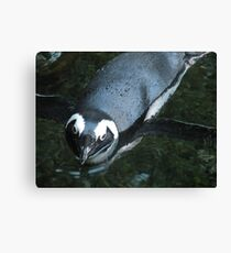 Got Any Fish??? Canvas Print