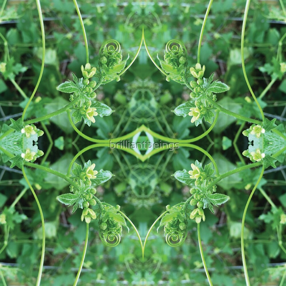 green tendril symmetrical pattern by brilliantbeings