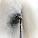 Pony view by gelibolu