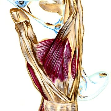 Anatomy of Martini by OliviaRains