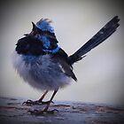 Blue Wren Again by Rebelle