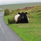 Dartmoor Cow 2 by lezvee