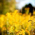 Autumn Love - Wildflower Field by OLIVIA JOY STCLAIRE