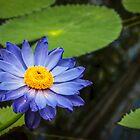 Purple Water Lily by Viv Thompson