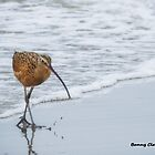 Long Billed Curlew by Bunny Clarke