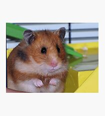 The Hamster Photographic Print