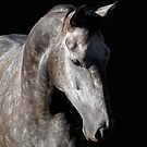 Equus by JulieM