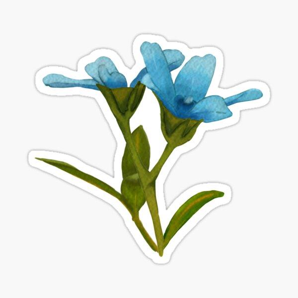 Digital Painting | Tweedia Blooms Sticker
