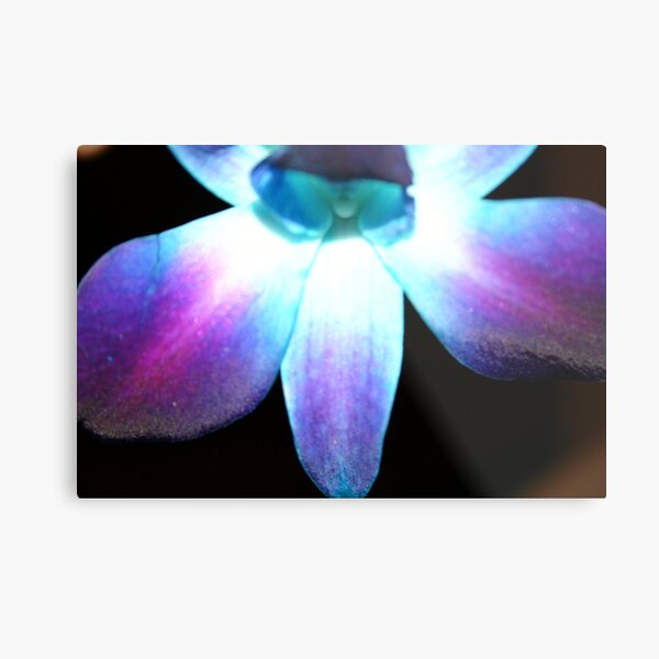 Blue Orchid (Bow Down & Surrender) Metal Print