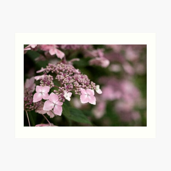 Pink Lace Art Print