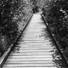 Mt. Agamenticus Long Bridge by Judi FitzPatrick