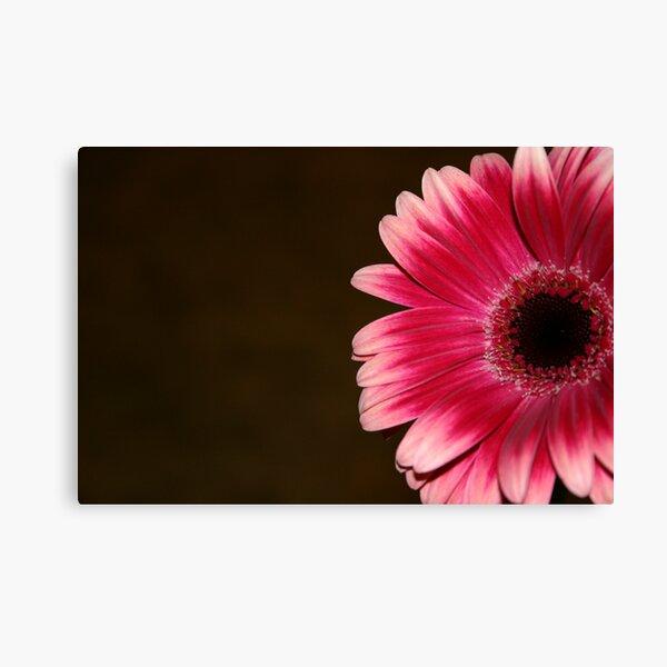 Pink & White Gerbera Canvas Print