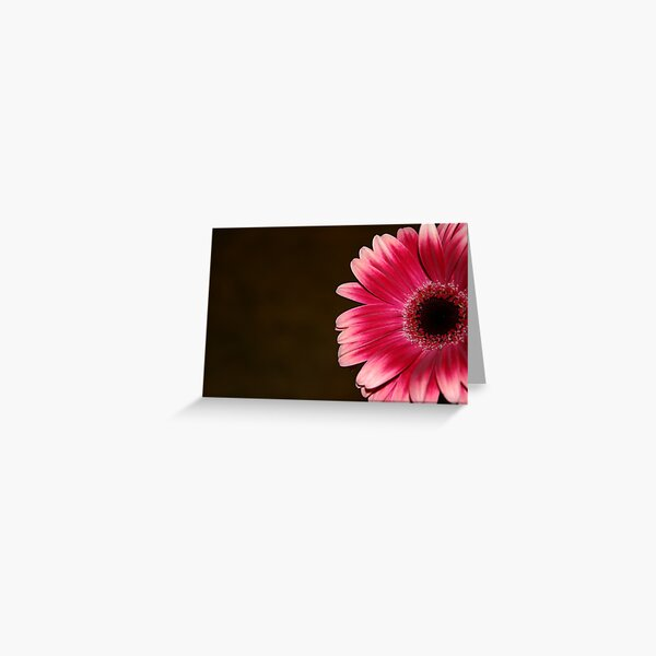 Pink & White Gerbera Greeting Card