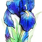Bearded Iris by drakhenliche