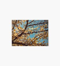 Yellow and Blue  Art Board Print