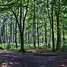 Bacton Woods Norfolk UK by Mark Snelling