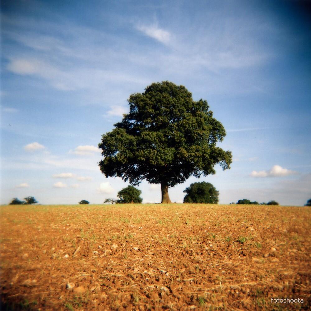 Tree in a field by fotoshoota