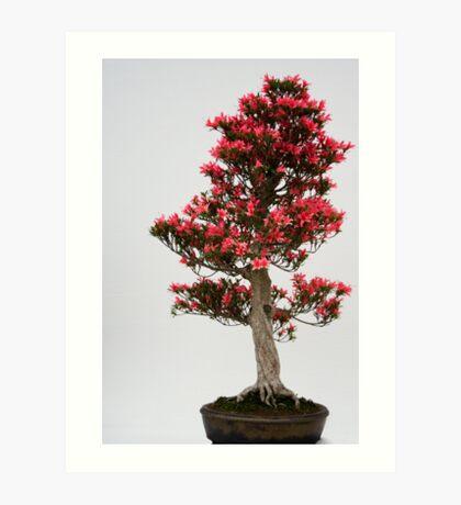 Red Bonsai Art Print
