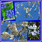 Beautifully Blue - Blossoms and Flowers of Spring Collage by BlueMoonRose