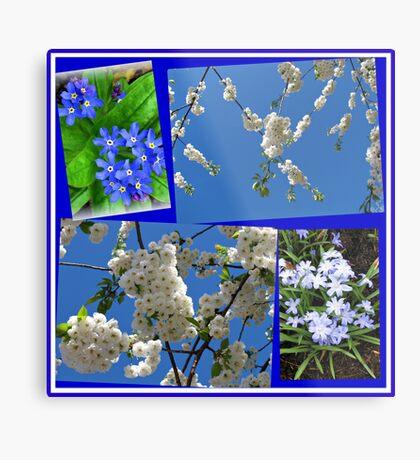 Schön Blau - Blüten und Blumen der Frühlings-Collage Metallbild