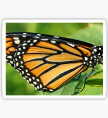 Monarch's Wing in Macro Sticker