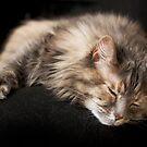 Chloe naps by Lynn Starner