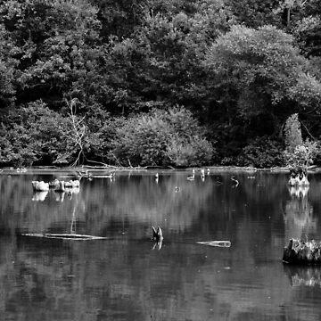 grantchester meadows by grchrdanderson