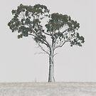 Winter by Kim Roper
